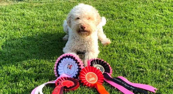 Heli Hounds dogs with rosettes